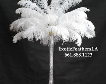 USA Store White Ostrich Feathers 17 to 20 inch. Ostrich Tail Feather Plumes. 1 to 100 pcs. Feather Centerpieces,Mardi Gras,Feather Fan,Samba