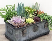 Succulent Arrangement Mother 39 s Day Gift Rustic Trunk Succulent Planter Succulent