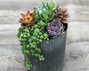 Succulent Arrangement - Corrugated Metal