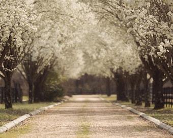 Spring backdrop, Summer Digital Backdrop, Castle Digital Background, Flower Path, Forest, Dreamy Backdrop, Photoshop, PSE -Instant Download