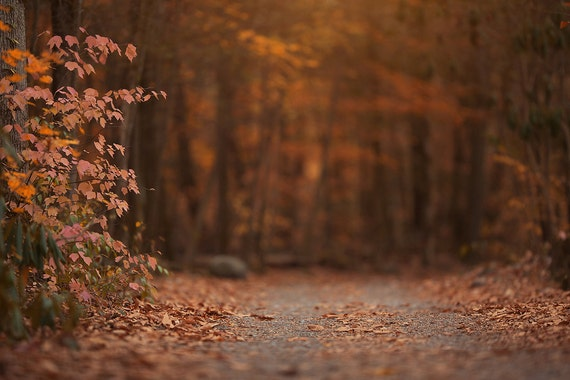 Fall Digital backgrounds and backdrops — KCC Photoshop Actions