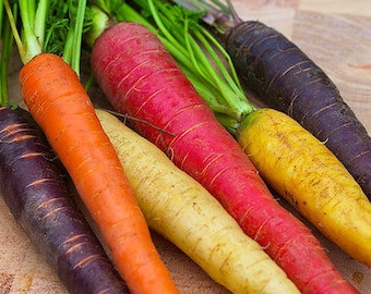 SALE Rainbow Carrot Seed Mix Non GMO Organic 200 Seeds #1143