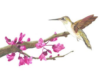 "Hummingbird Watercolor Painting ""How Sweet It Is"" , All Proceeds donated to Cancer Research"