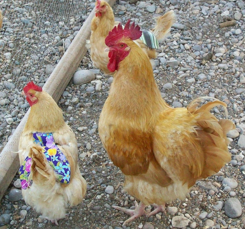 1 SUPER WIDE /& LONG COVERAGE Chicken Saddle Apron Hen CHICKEN BACKYARD POULTRY
