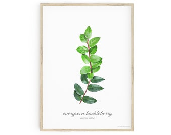 Printable Botanical Art, Evergreen Huckleberry Wall Art, Vaccinium Ovatum, labelled with common and scientific name