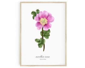 Printable Botanical Art, Nootka Rose Wall Art, Rosa nutkana, labelled with common and scientific name