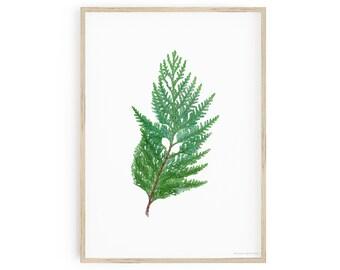 Printable Botanical Art, Western Red Cedar Wall Art, Thuja plicata