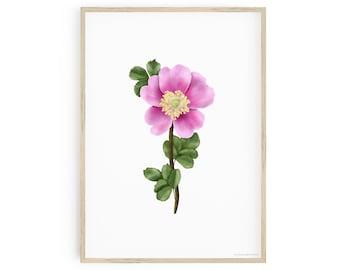 Printable Botanical Art, Nootka Rose Wall Art, Rosa nutkana