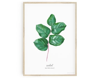 Printable Botanical Art, Salal Wall Art, Gaultheria Shallon, labelled with common and scientific name