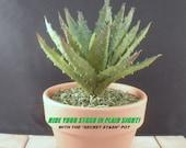 SECRET STASH Faux Succulent - Hide-A-Key Pot - 8 quot Tall x 4-1 4 quot Wide - quot Hide Your Stash in Plain Sight quot