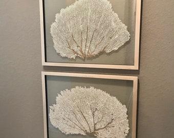 "Pair (2) of Framed Sea Fans - Custom Color with Custom Color Frame 16x20"""