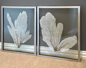 """Pair (2) of Framed Sea Fans - White with Custom Color Frame 16x20"""""""