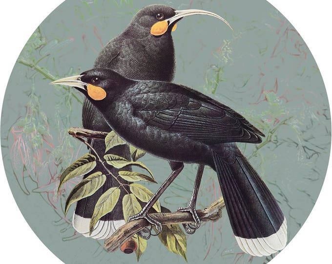 Native Bird Wall Sticker
