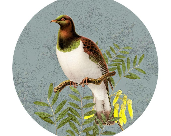 Native Bird Greeting Cards
