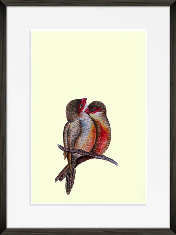 Bird Colorful Love Bird Color Pencil Sketch Home Decor Etsy