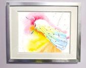 Watercolour Rainbow Ermine Moth Print