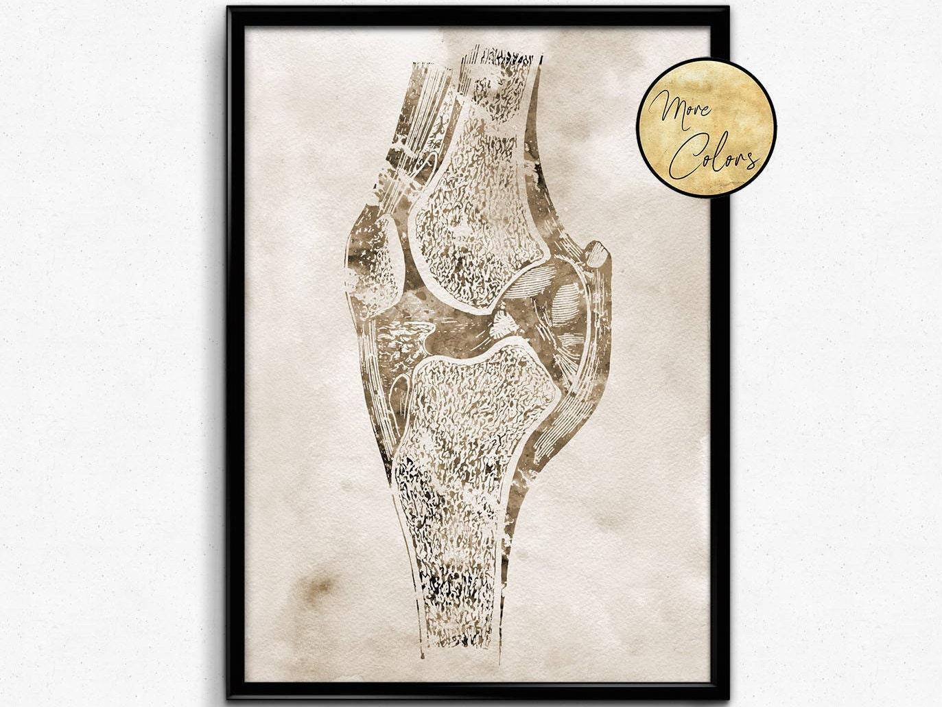 Knee Bone Watercolor Print Human Anatomy Knee Orthopedic Etsy