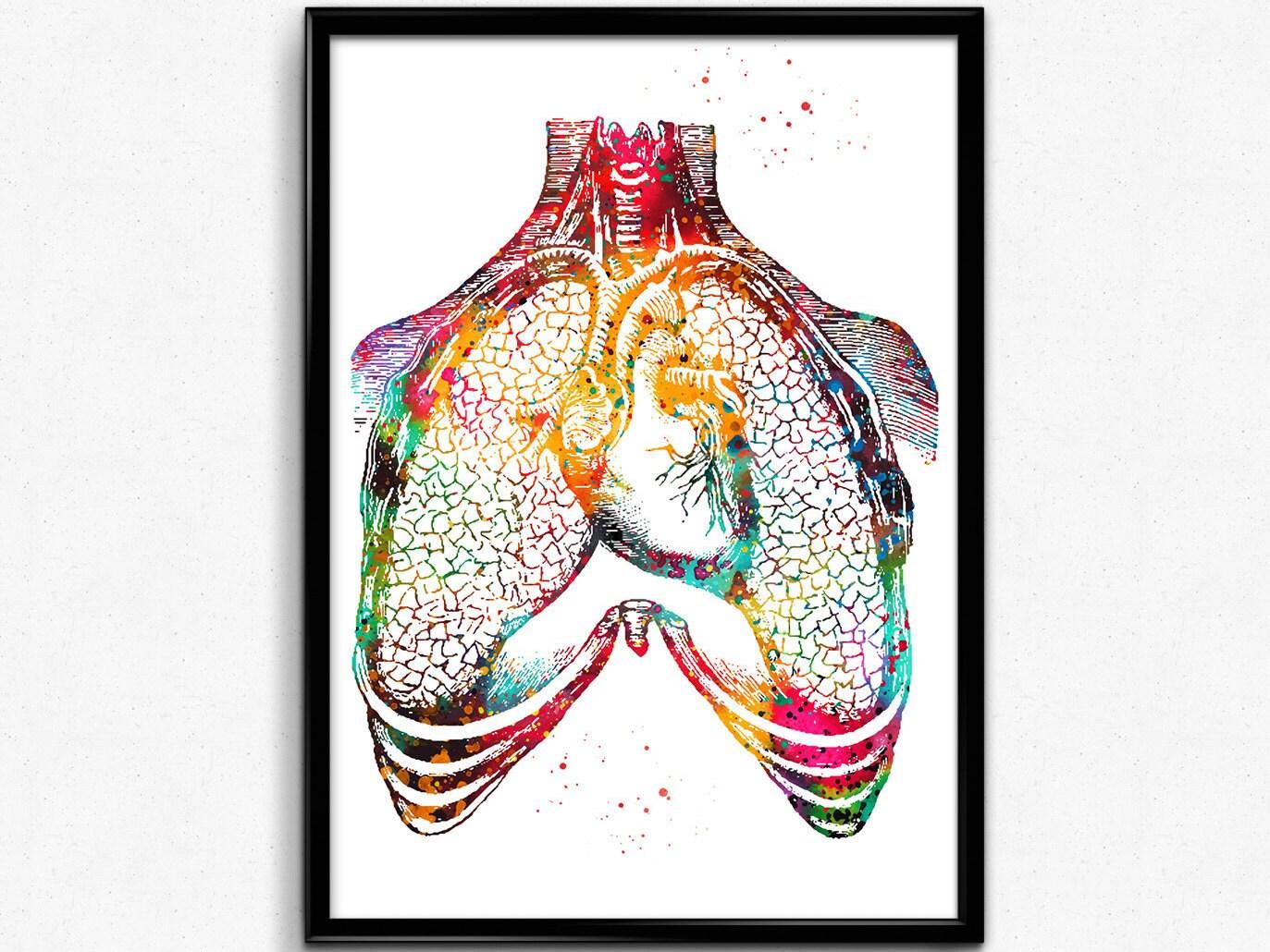 Menschliche Herz und Lunge Anatomie Kunstdruck | Etsy