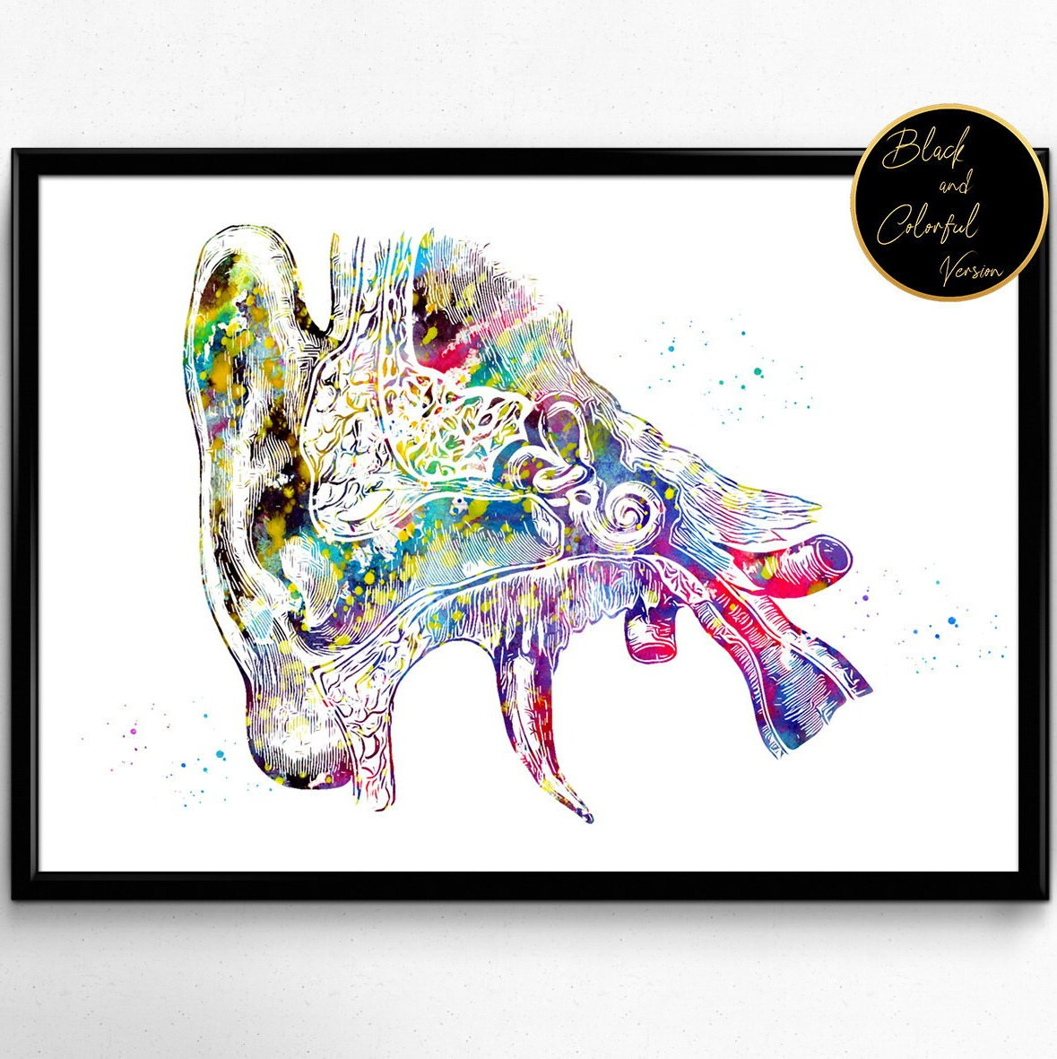 Menschliche Ohr Anatomie Aquarell Druck Audiologie Plakat   Etsy