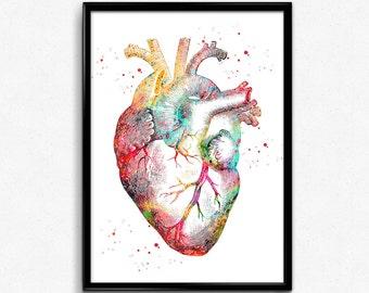 Human Heart, watercolor print, medical art, heart poster,  heart anatomy art ,surgery anatomical heart, print(1144)