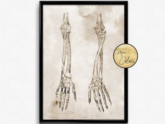 Arm BonesWatercolor Print Skeletal Arm Bones Medical