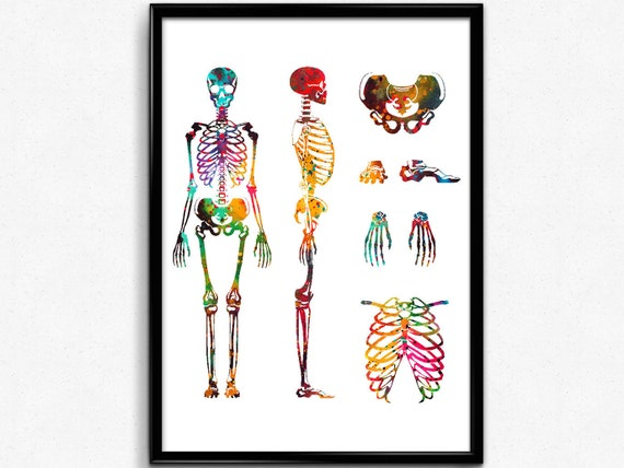 Menschlichen Körper-Skelett-System Aquarell Druck | Etsy