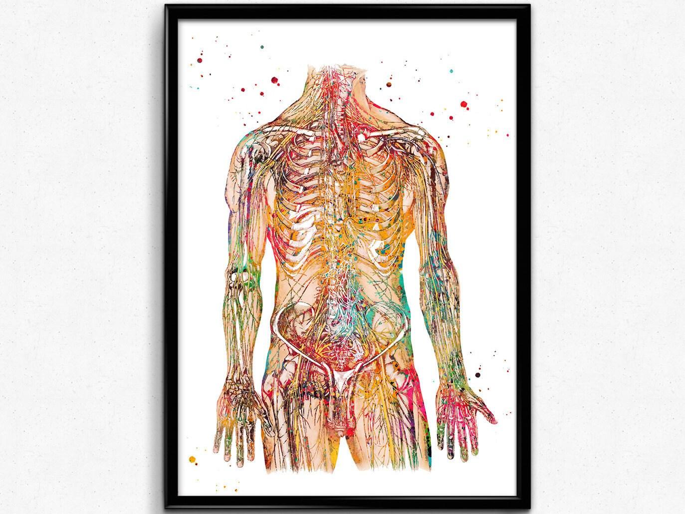 Menschlichen Körper Nerven Struktur nervös System Anatomie | Etsy
