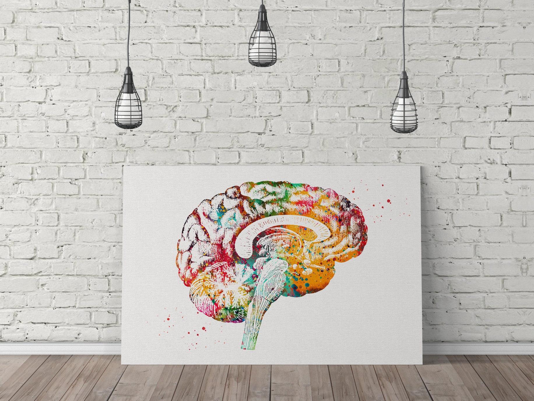 Brain anatomy cross sectionhuman brainposter medical | Etsy