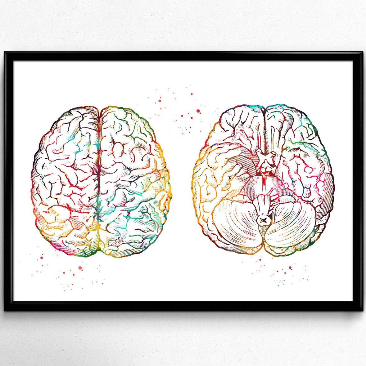 Menschliche Gehirn Regelung die Anatomie des Gehirns | Etsy