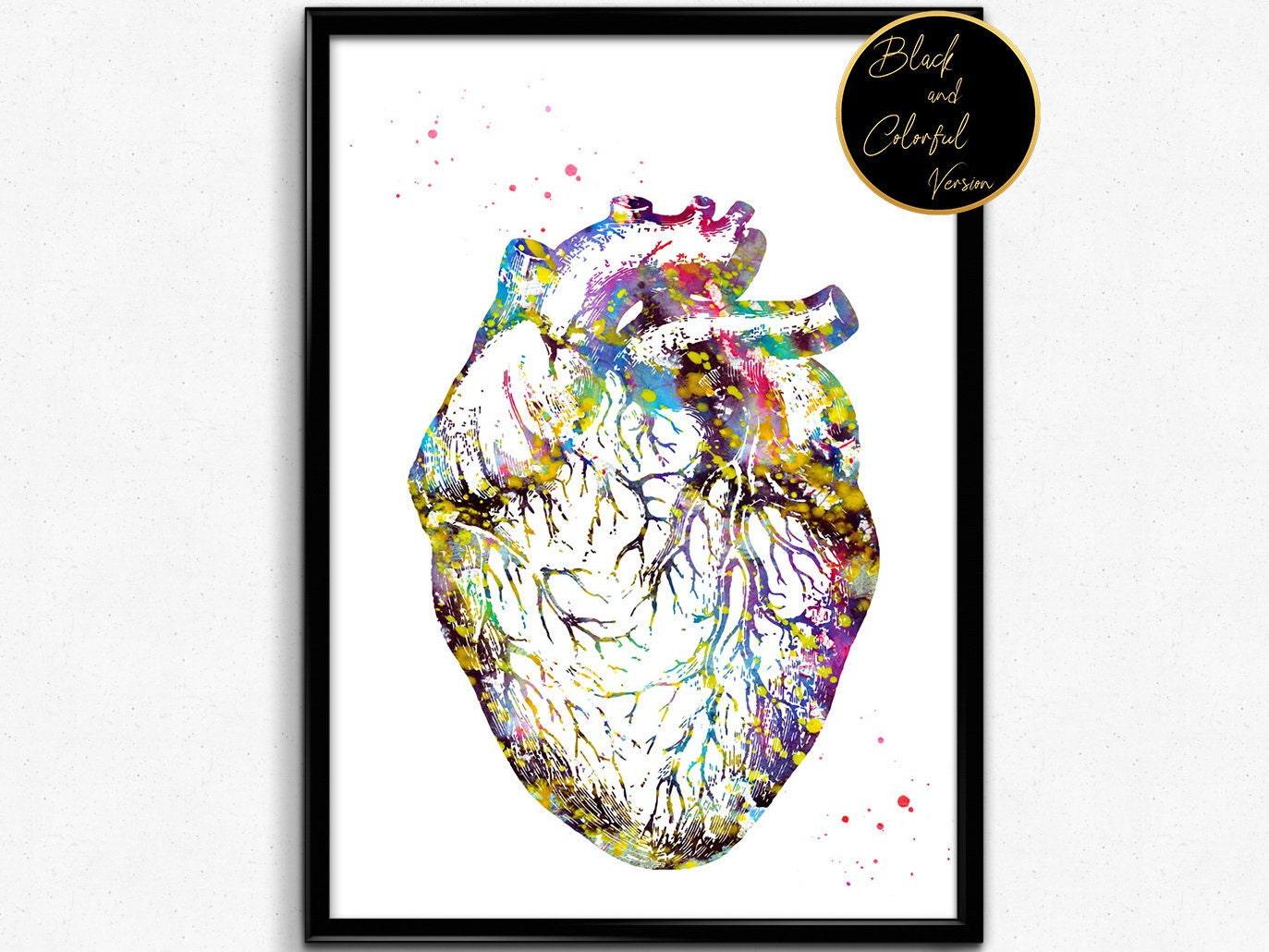 Heart Anatomy Watercolor Print Medical Art The Human Heart Etsy