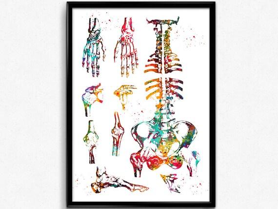 Menschliche Knochen menschlichen Körper-Skelett-System
