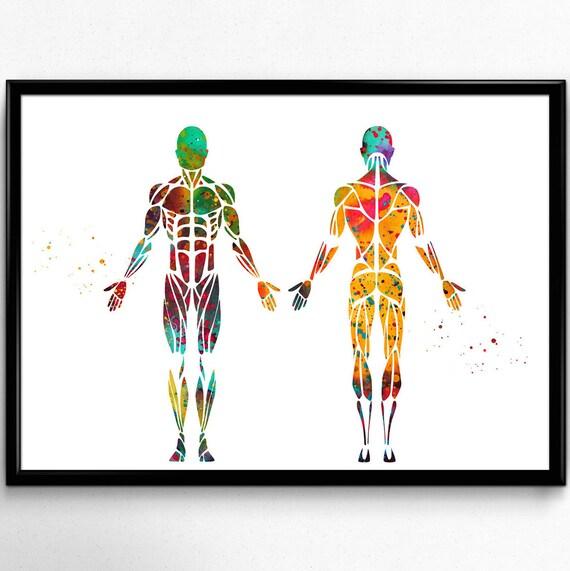 Male Muscular System Anatomy Anatomy Human Body Etsy