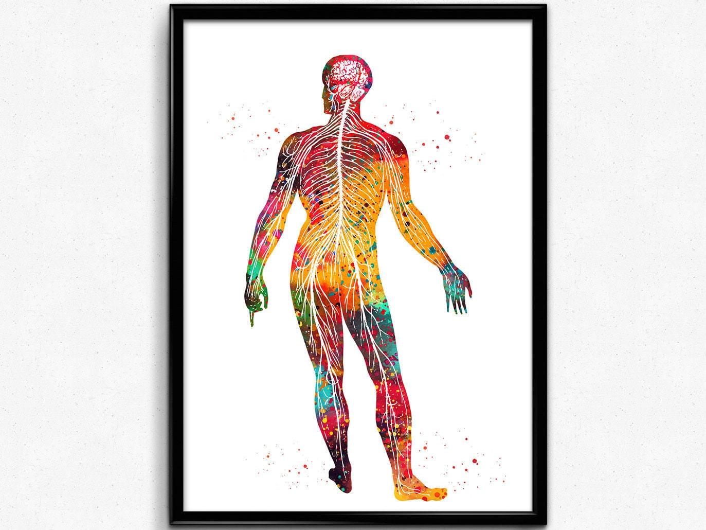 Nervensystem menschliche Körper Nerven-Struktur | Etsy