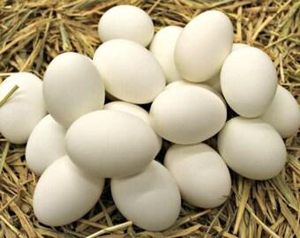 Duck Hatching Eggs - 1 Dozen