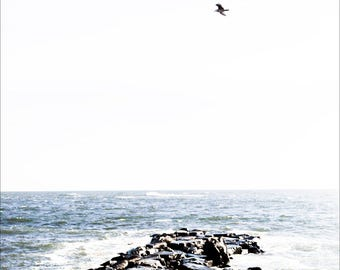 bird over rocky shore, Avalon NJ 2016.