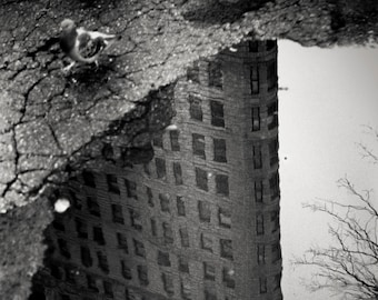 pigeon, Flat Iron Building reflection in puddle, NY 1999.