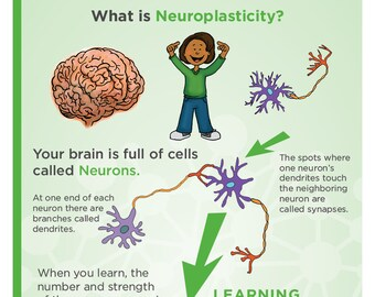Plasticity Poster For Middle School and up