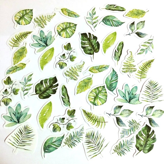 45 Pcs Tropical Leaves Sticker Plants Sticker Flakes Etsy 115,000+ vectors, stock photos & psd files. 45 pcs tropical leaves sticker plants sticker flakes filofax stickers scrapbook leaves schedule sticker nature greenery monstera leaf
