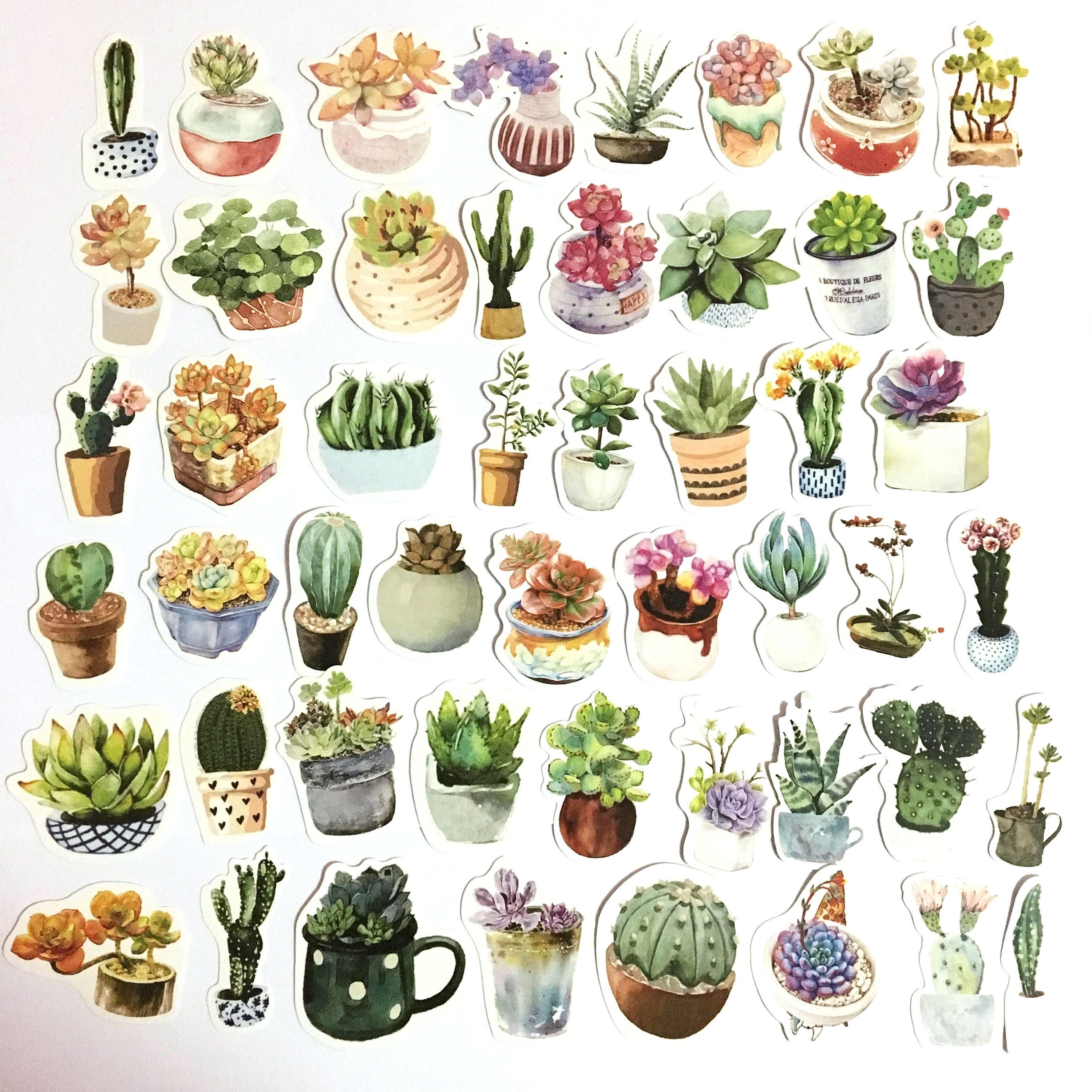 50Pcs Succulent Plants Series Mixed Cactus Stickers For Notebook PC Skateboard