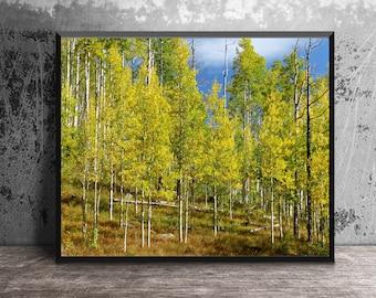 Aspen Trees Photo, Photo Print, Aspen Print, Fall Colors,  Home Decor, Nature Photography, Photo Art, Cottage Decor, Wall Art, Nature Decor