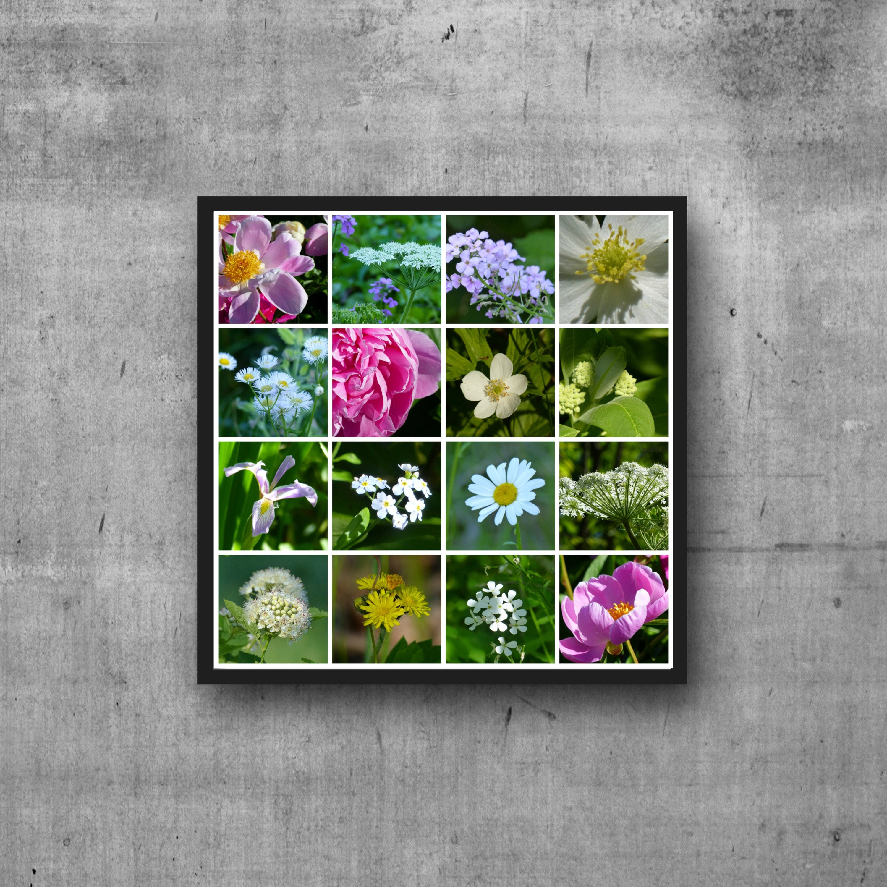 Michigan Wildflowers Flower Pictures Nature Photography Garden Decor Flower Collage Green Grass Photo Print Spring Images Green Art