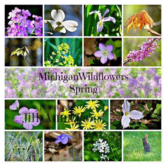 Photo Collage Spring Flowers Nature Photography Michigan Etsy