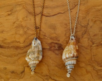 Real Seashell Necklace   Goldfield   Sterling Silver   Unique   Ocean   love   Seashell Jewelry   Real Shell   sea   talia luvaton jewelry