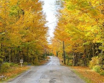 Fall Foliage Photo- Door County Print, Wisconsin Print, Fall Foliage Decor, Fall Colors Print, Colorful Wall Art, Fall Wall Art