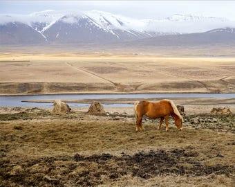 Iceland Wall Art Digital Print- Icelandic Horse Photography, Home Decor, Landscape Travel Photography