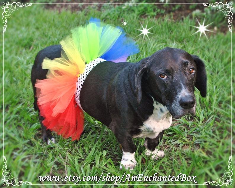 My Little Pony Dash Clown RAINBOW HARPER TROLL Tutu Skirt for Dogs Puppy Puppies Dog Furry Friends Dressup Outfit Tutu Costume Doggie