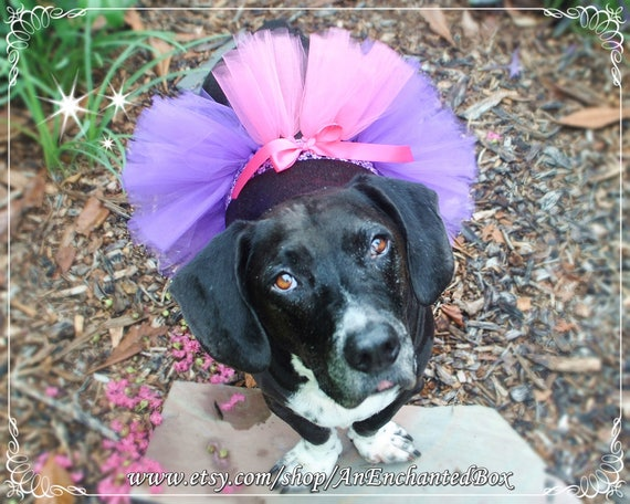 Doggie Tutu Skirt Dog RAPUNZEL TUTU Skirt in Purple and Pink for Dogs Furry Friends Puppies and Tutu Costume Puppy Dressup Outfit