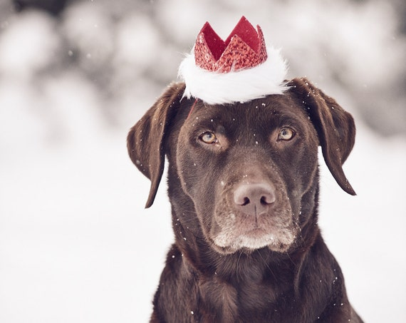 Santa Hat || Christmas Hat || Dog Crown || Dog Hat || Holiday Pet Accessory
