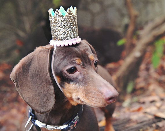 Dog Hat || Dog Birthday || Pet Birthday || Crown || Cat Birthday Crown Hat || Animal Birthday Hat