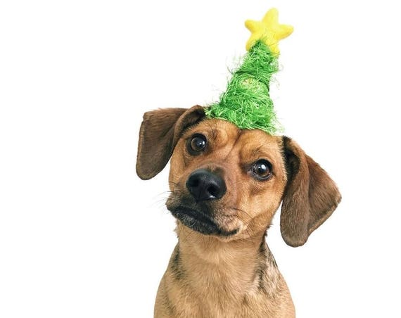 Christmas Tree Hat || Animal Hat || Dog hat || Holiday Accessory